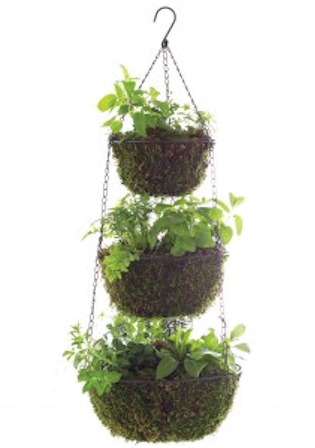 msl-good-things-hanging-herbs-021-mld109975_vert.jpg (skyword:289431)