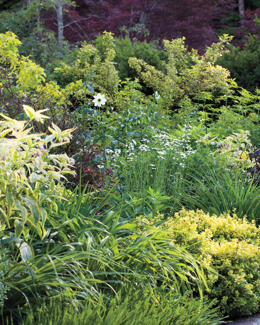bold-plantings-hollister-house-7699-md109020.jpg