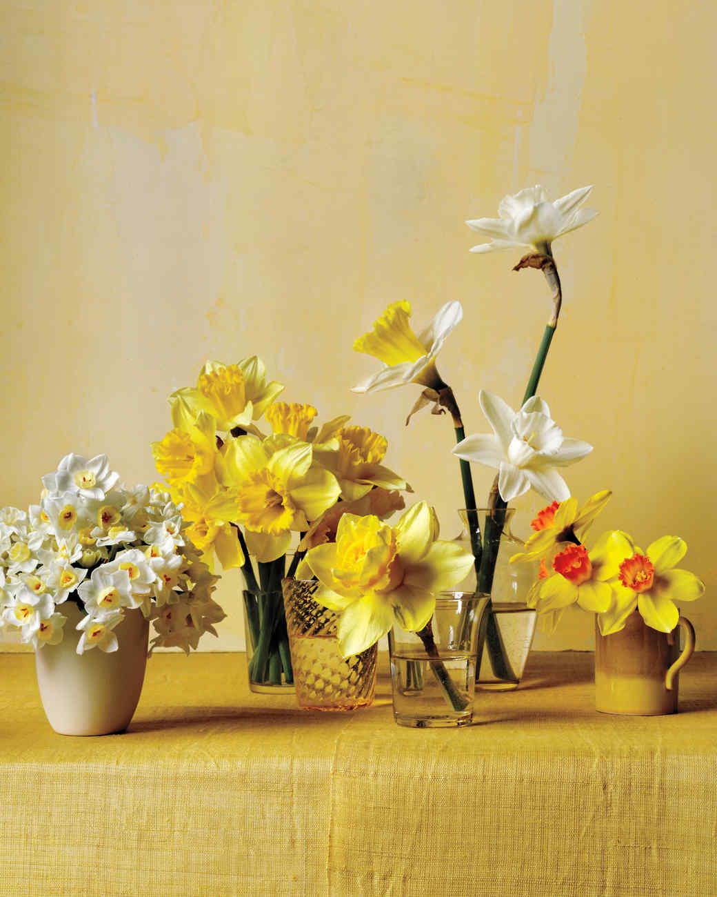 daffodil-flower-arrangement-v3-n-comp-d111001.jpg