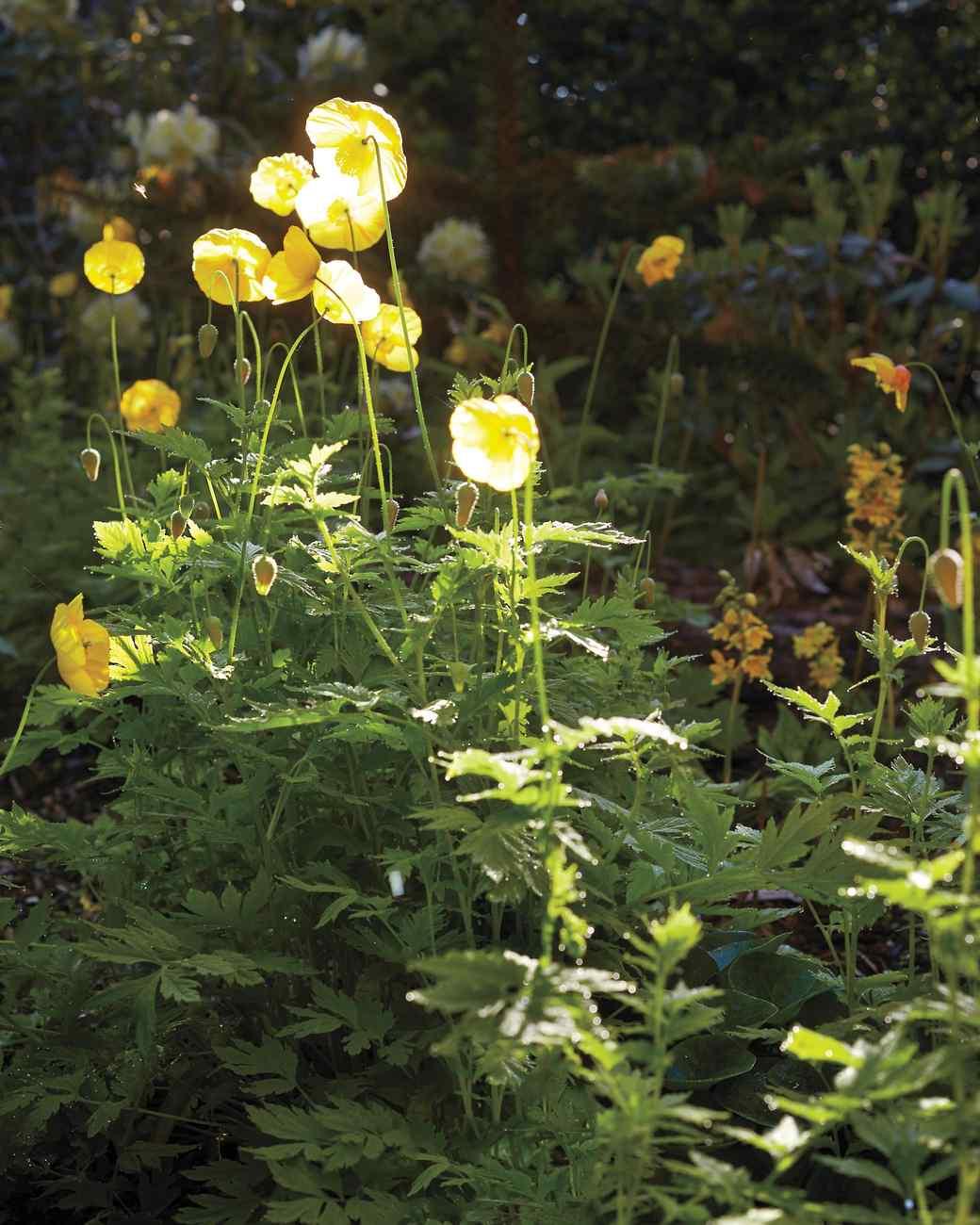 sakonnet-garden-rhode-island-0157-d112230-0216.jpg