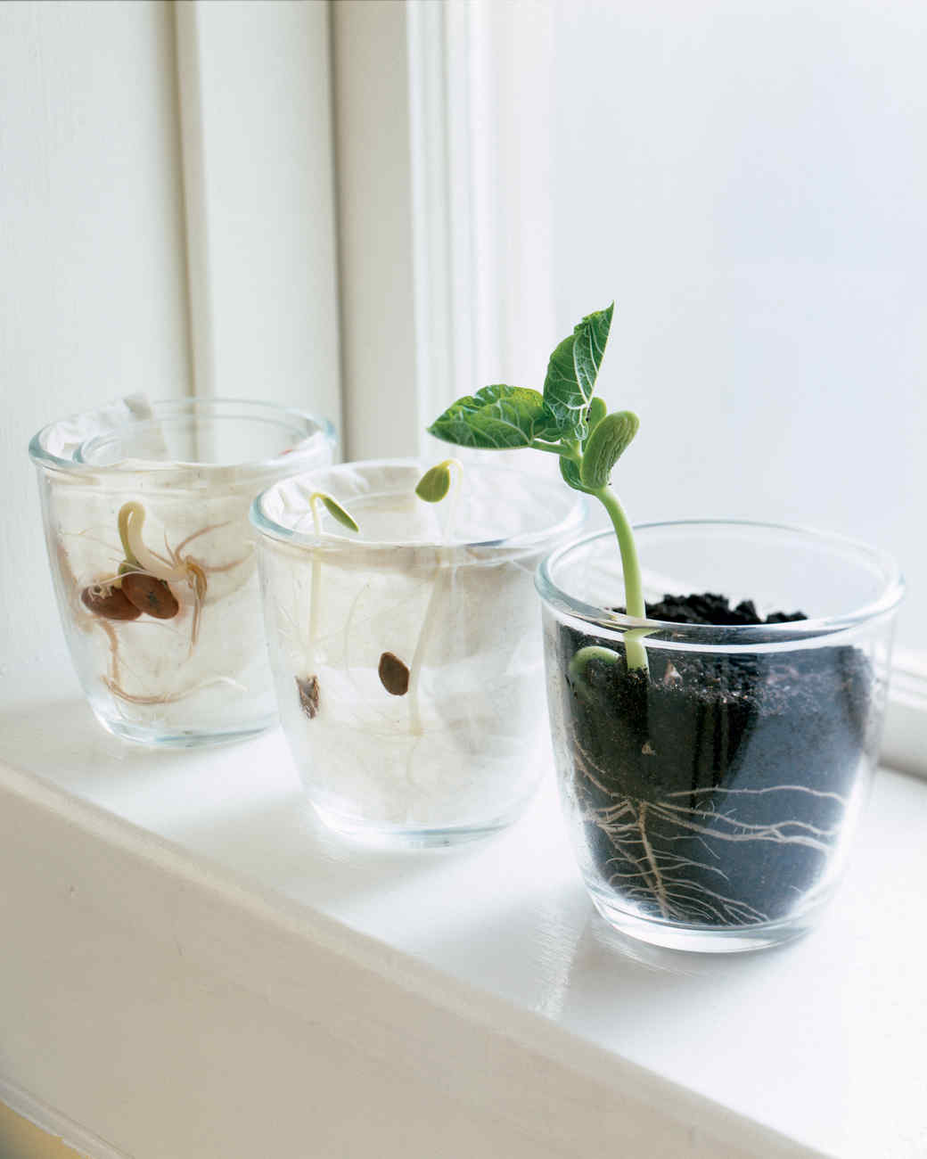 It S Alive How To Make A Terrarium Martha Stewart