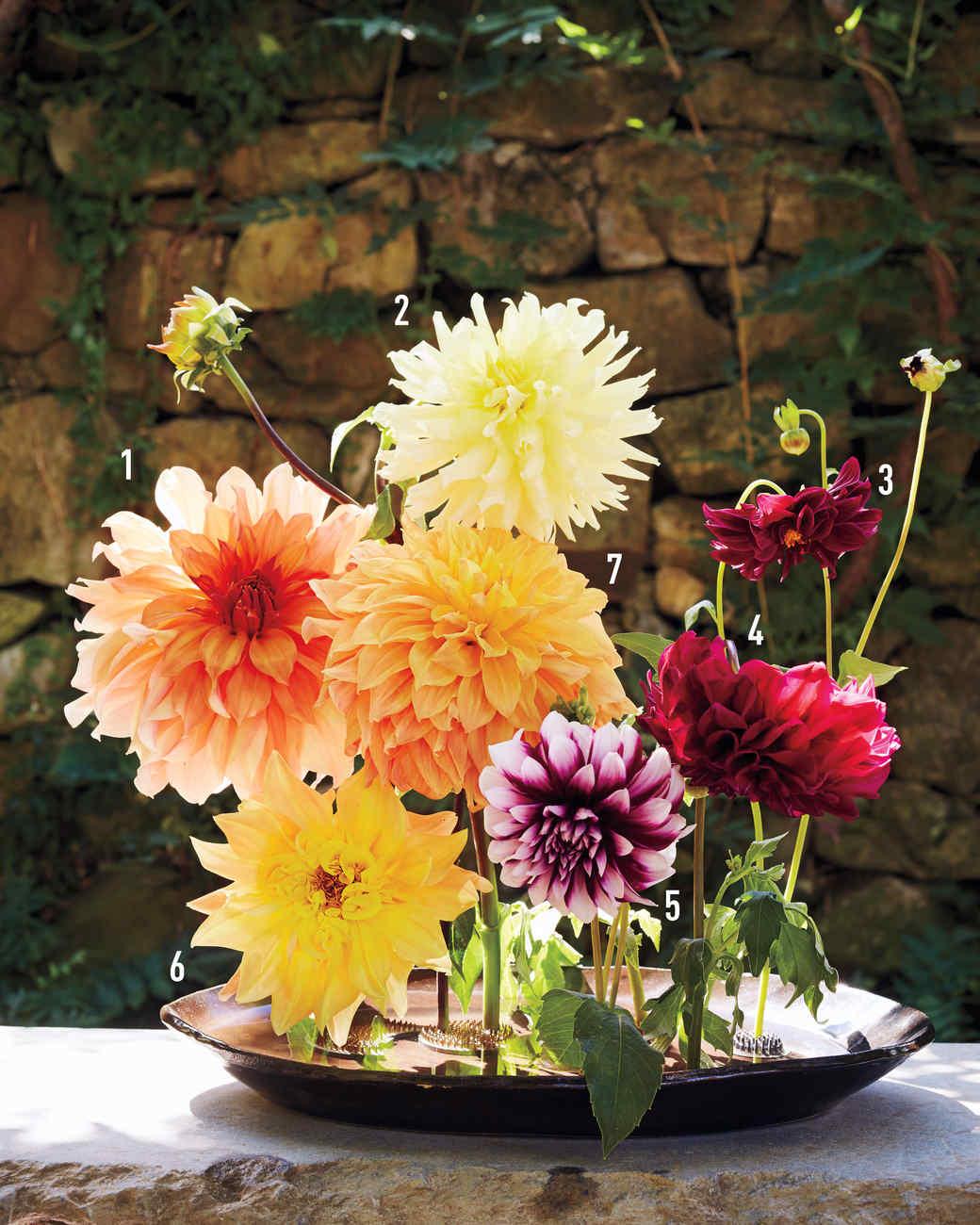 meadowburn-farms-garden-dahlia-glossary-numbered-v3-212-d111557-0815.jpg