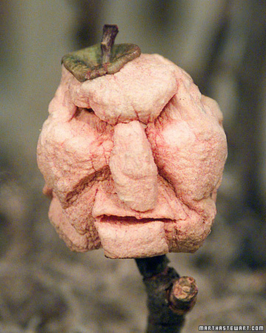 Shrunken apple heads video martha stewart for Idee deco halloween