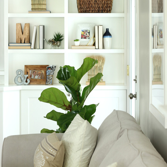 Bookshelves.JPG (skyword:212162)