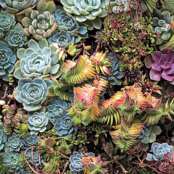 Flora Grubb succulent garden
