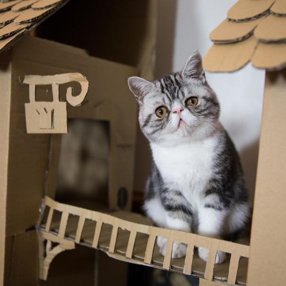 cat on castle walkway