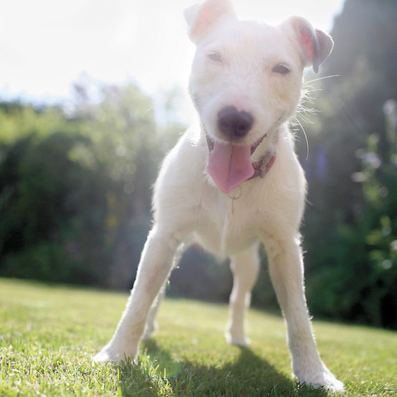 dog-ms108863.jpg