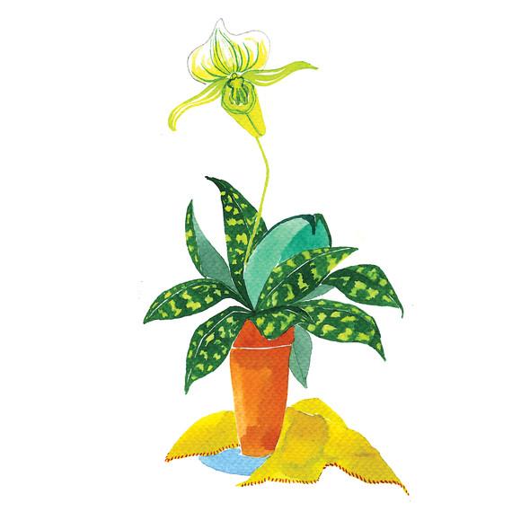orchid-i111724.jpg
