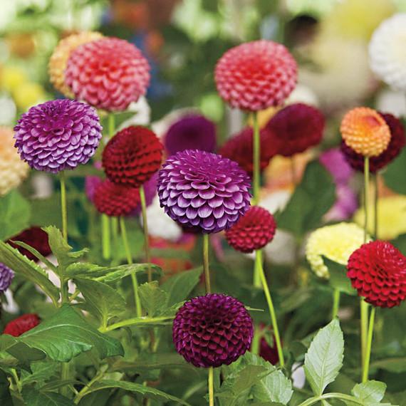 flowers-s111362.jpg