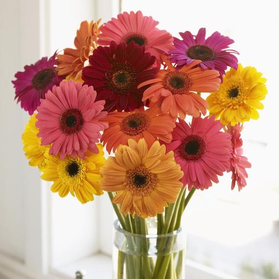 gerbera-daisies.jpg