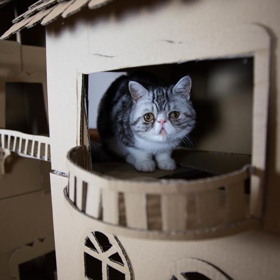 cat on castle balcony