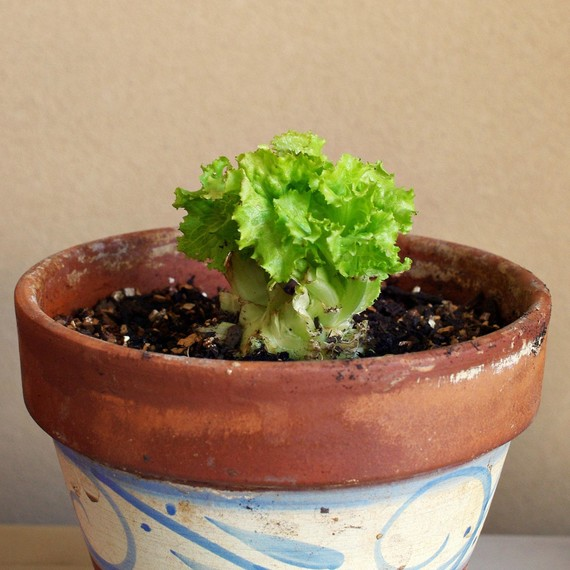 Lettuce Container Garden: 7 Pro Tips For Starting A Container Garden