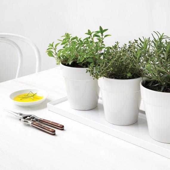 herbs-023-md110117.jpg
