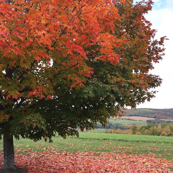 fall-folliage-1-1115.jpg (skyword:203462)