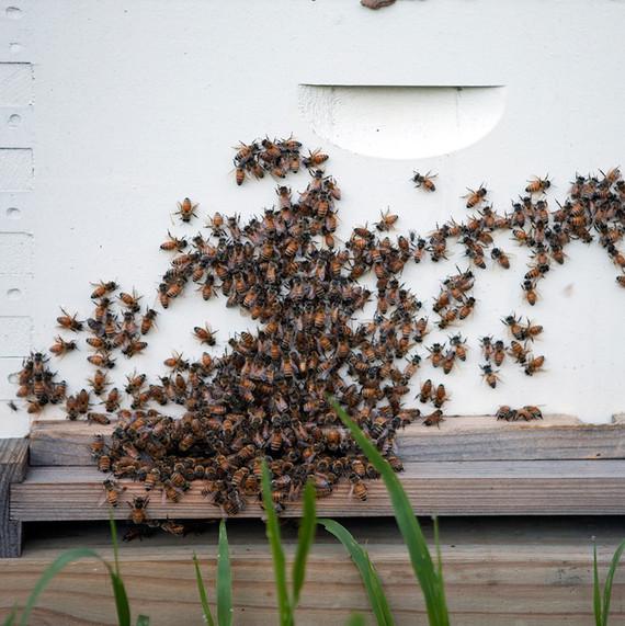 bees-waxing-kara-0614.jpg