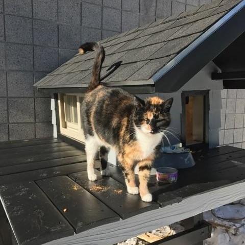 Boston Police Department cat condo