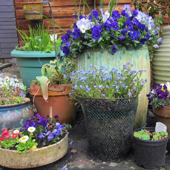 7 Pro Tips for Starting a Container Garden Martha Stewart