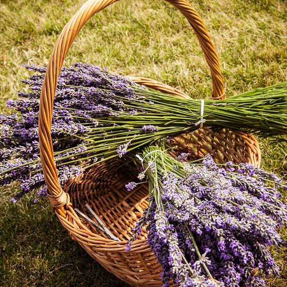 lavender-bushels-0715.jpg