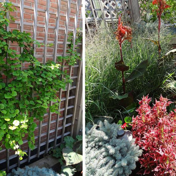 Vine-and-shrub-1102(1).jpg (skyword:198353)