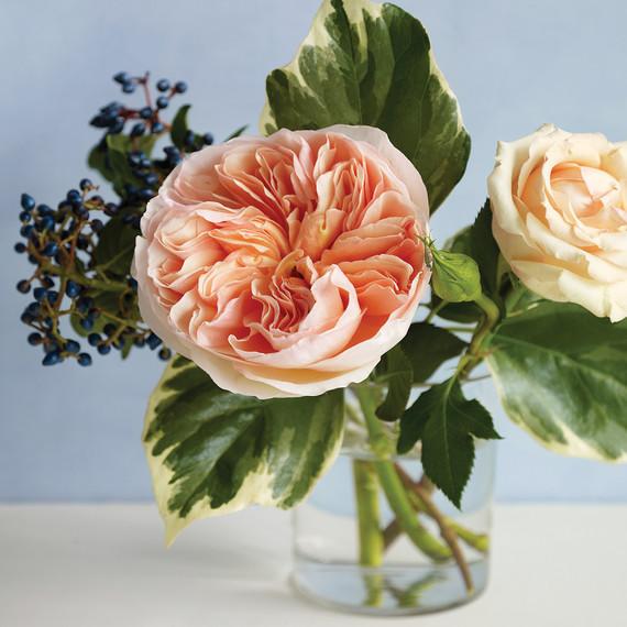 md104713_0210_roses_17.jpg