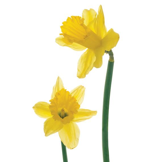 mld103100_0308_flowers.jpg