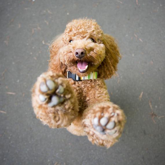 pet-photography-5-0215.jpg