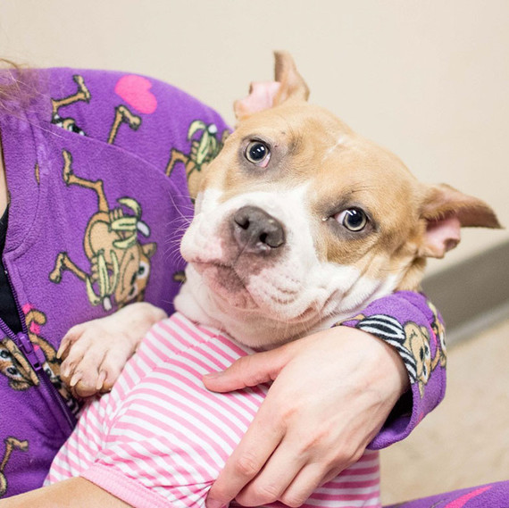 The LifeLine Animal Project in Atlanta came up with the (genius) idea to let people dress pooches in adorable nightwear and have them for a sleepover.