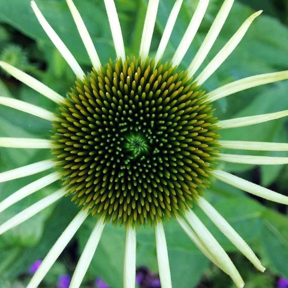 flower-waxing-kara-0614.jpg