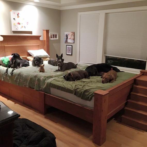 mega dog bed