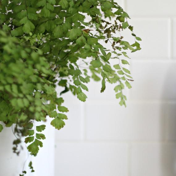 kitchen-plant-styling-0415.jpg
