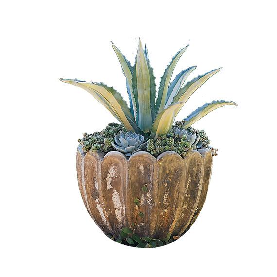 succulent-pot-mlasmagvepot.jpg