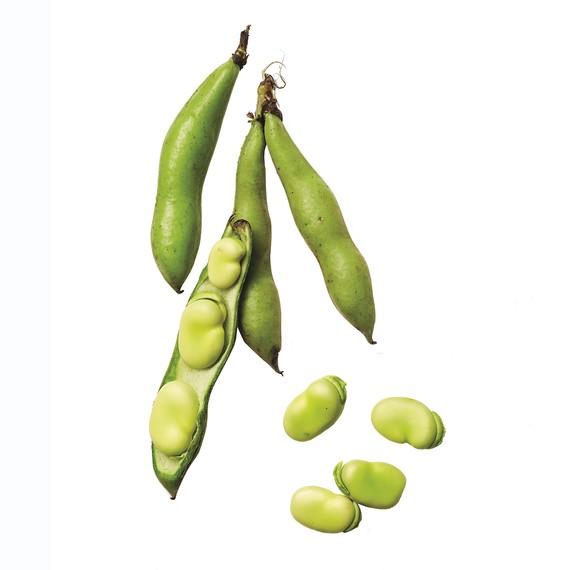 fava-beans-063-d112767-0216.jpg