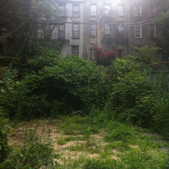 garden-before-knotweed-0616.jpg (skyword:296337)