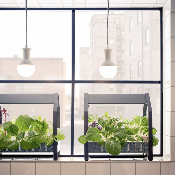 ikea-hydroponic-garden-1116.jpg (skyword:359924)