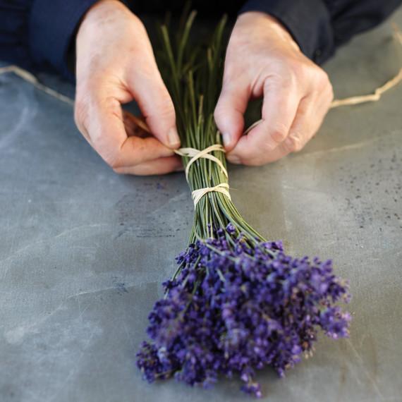 martha_lavender-111-d112299.jpg