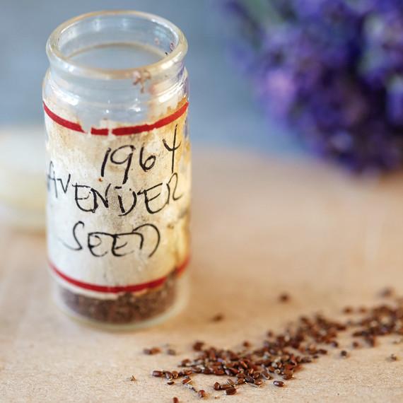 martha_lavender-172-d112299.jpg
