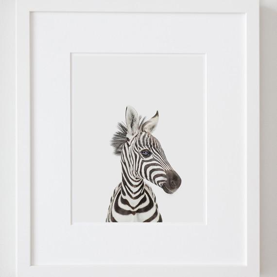 sharon-montrosebaby-zebra-ld.jpg