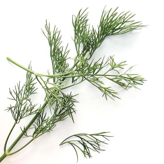 herbs-ingredients-001-d112369.jpg