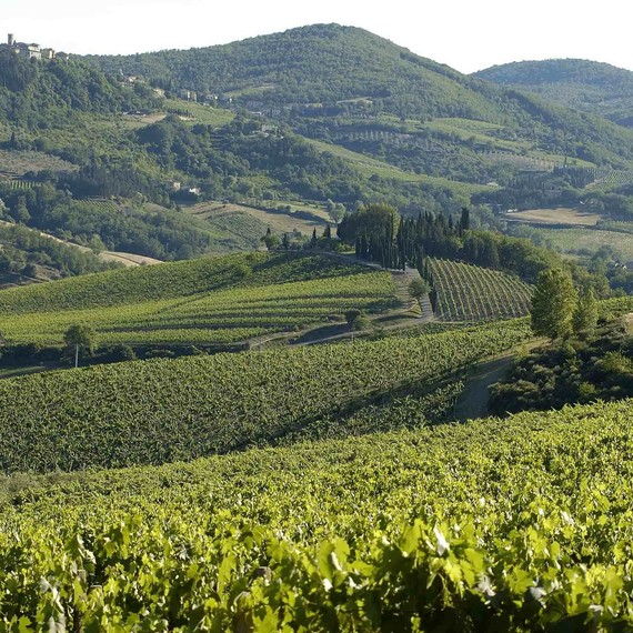 prosecco-vineyard-veneto-0716.jpg (skyword:307343)