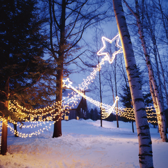 star-lights-in-trees-la103058.jpg
