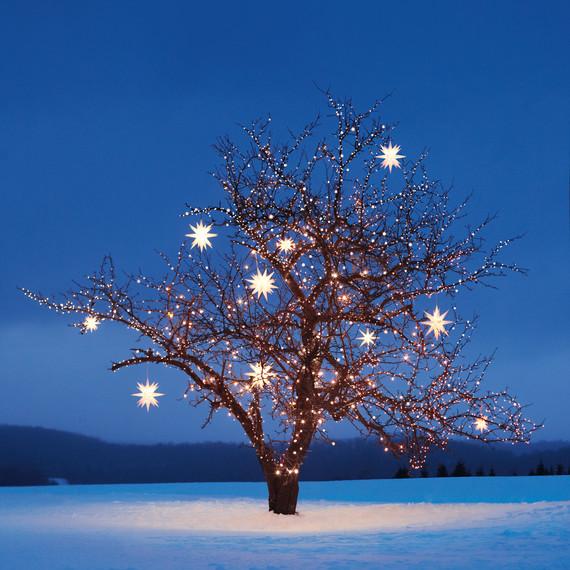 tree-light-lapse-515-d107338l.jpg