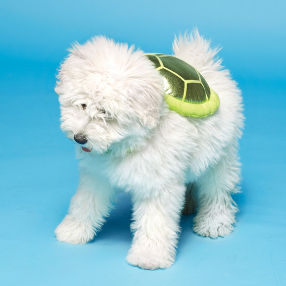 dog-turtle-costume-235-d112263.jpg