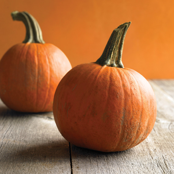 med103705_hal09_small_pumpkins.jpg