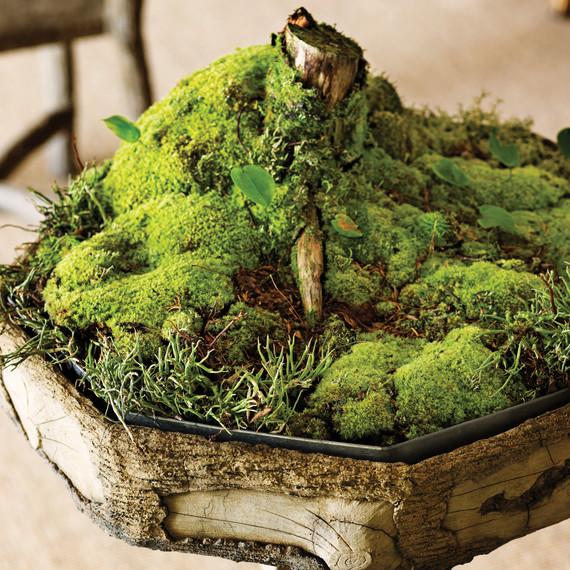 moss-garden-tree-0811mld106442.jpg