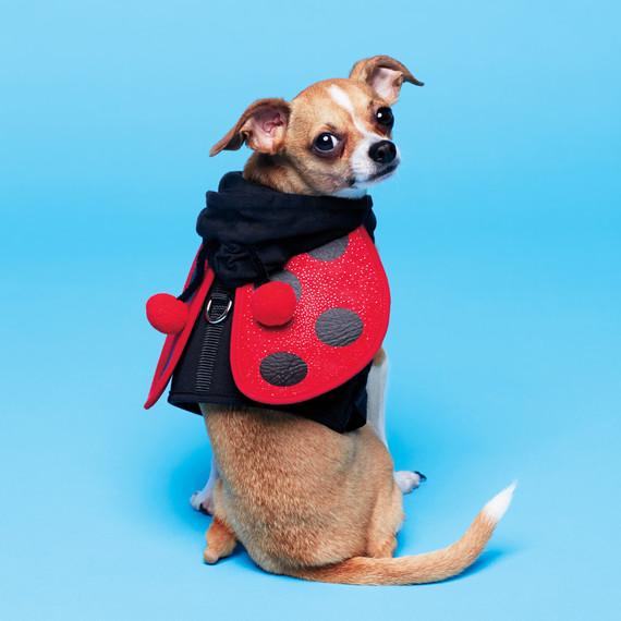 dog-ladybug-costume-049-d112294.jpg