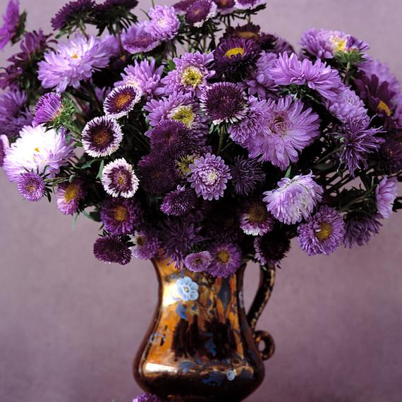 fall-flowers-asters-purple-1014.jpg
