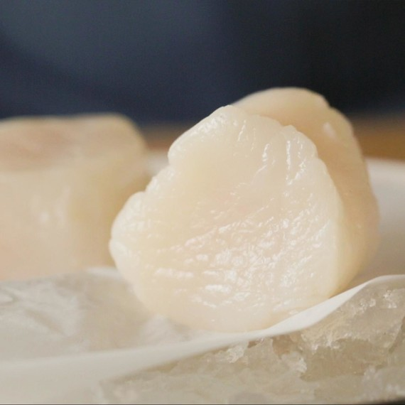 Fresh raw scallops