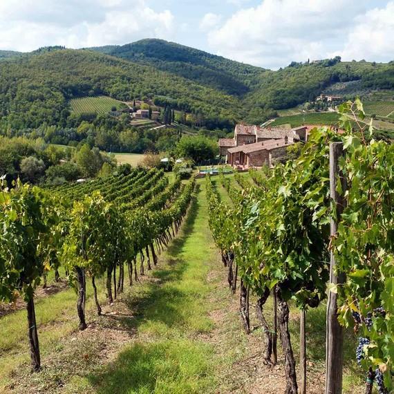 chianti-vineyards-landscape-0616.jpg (skyword:288094)