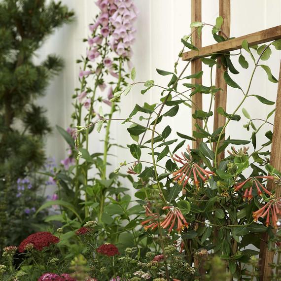 gardendesign-after-foxglove-0616.jpg (skyword:296446)