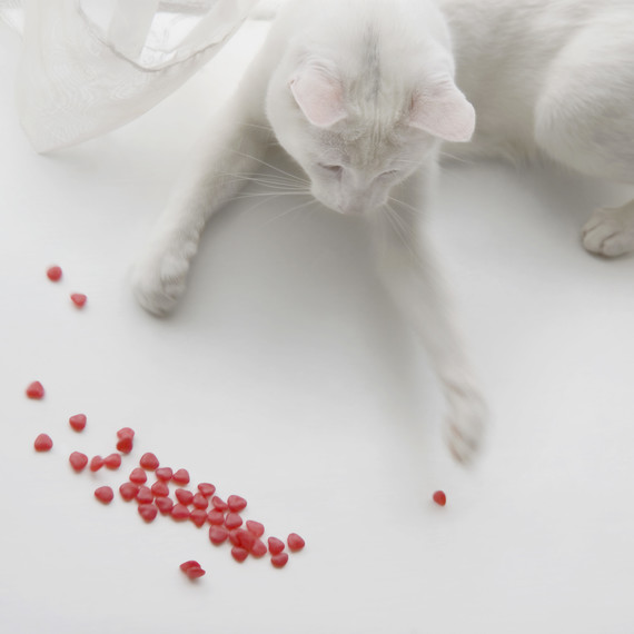 cat playing with Valentine's Day candy